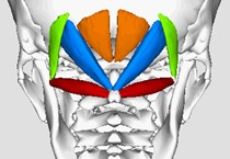 suboccipital_muscles_-_animation04-1-hjside.jpg